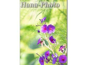 1433) フロックス、アルストロメリア、不明紫の花、紫アゲラタム、白アゲラタム    ポストカード5枚組の画像