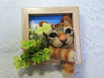 四つ葉のクローバーと茶トラ猫さんの画像