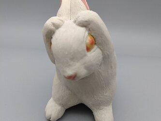 200gAs 毛繕いウサギの画像