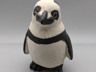200gAs パンダペンギンの画像