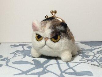 gamaneko※三毛猫の画像