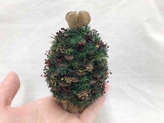 松ぼっくりツリー(S-2)の画像