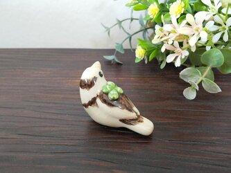 花小鳥/小(陶)ジュウシマツ・クローバーの画像