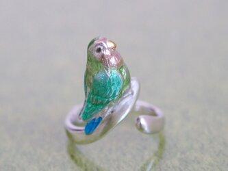コザクラインコのリングの画像