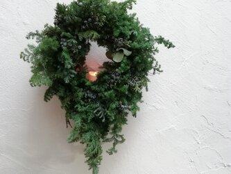 針葉樹のクリスマスwreathの画像