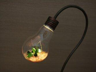 [okuda様お問い合わせ分] bulb terrariumの画像