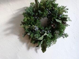 針葉樹とユーカリのクリスマスリース(小)の画像