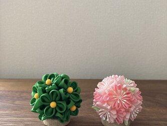 桜橘 (二) 雛飾り の画像