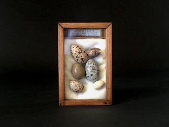 擬卵の入った小箱B。の画像
