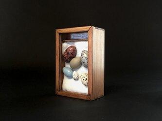 擬卵の入った小箱C。の画像