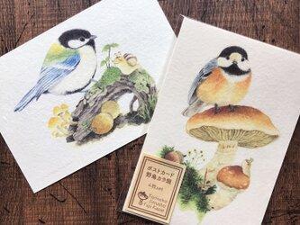 ポストカード『野鳥カラ類』4枚セットの画像