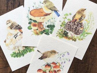 ポストカード『野鳥ヒタキ類』4枚セットの画像