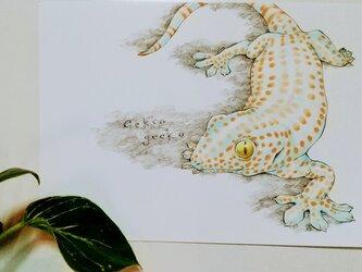 トッケイヤモリ -Gekko gecko-の画像