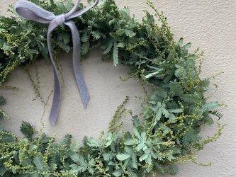 クリスマスリース4 ミモザアカシアのオーバルリースの画像