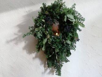 針葉樹とユーカリのクリスマスwreath-Ⅱの画像