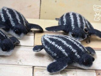 孵化したてのオサガメのポーチ 兼 財布の画像