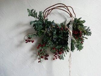 野バラの実と針葉樹のハーフリースの画像