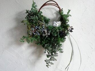 針葉樹のハーフリースの画像