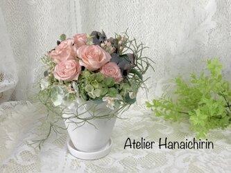 ユーカリ香る ガーデンピンクローズの画像
