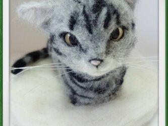 アメショー 猫 羊毛フェルト 香箱座りの画像