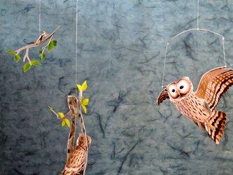 樹洞のフクロウの画像