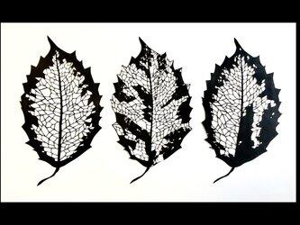 切り絵・虫食いの葉の画像