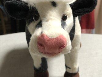 牛 四つ立ちタイプの画像