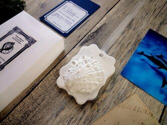 白い博物館 ■ アロマストーン ■ 貝殻標本 ウミギクの画像