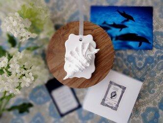 白い博物館 ■ アロマストーン ■ 貝殻標本 クモガイの画像