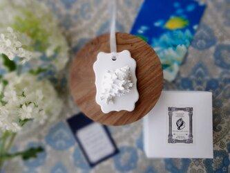 白い博物館 ■ アロマストーン ■ 貝殻標本 テングガイの画像