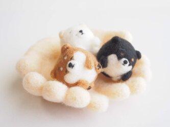 【受注製作】まゆ柴犬の赤ちゃん・仔犬(赤柴・黒柴・白柴)~薄目orぱっちりおめめ~羊毛フェルトの画像