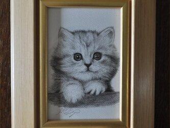 かわいい子猫の細密画の画像