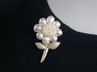 ちっちゃな真珠のお花の画像