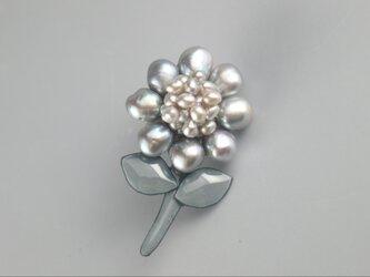 グレーシルバーの真珠花の画像