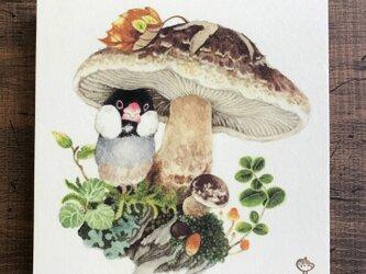 「文鳥とキノコ」15x15cm パネル作品の画像