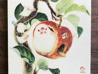 「白文鳥とリンゴ」15x15cm パネル作品の画像