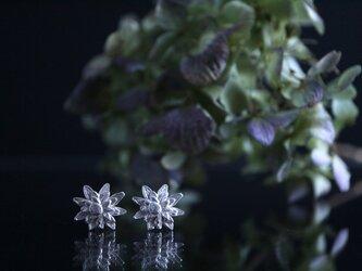 Silver earring 「Beautiful person」の画像