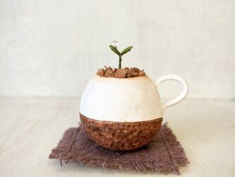 5367.bud 粘土の鉢植え マグカップの画像