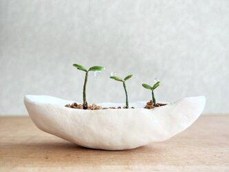5369.bud 粘土の鉢植え 背の順の画像