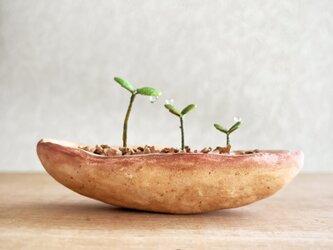 5370.bud 粘土の鉢植え 背の順の画像