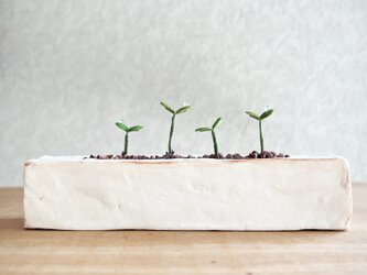 5373.bud 粘土の鉢植え プランターの画像