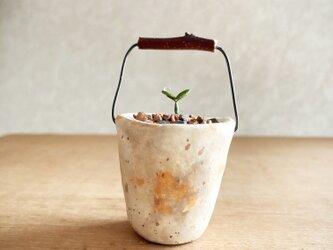 5374.bud 粘土の鉢植え バケツの画像
