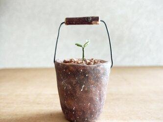 5375.bud 粘土の鉢植え バケツの画像
