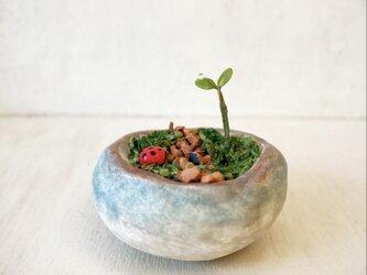 5381.bud 粘土の鉢植え 箱庭の画像
