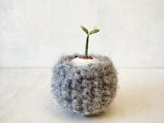 5382.bud 粘土の鉢植え お包みの画像