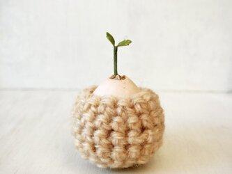 5383.bud 粘土の鉢植え お包みの画像