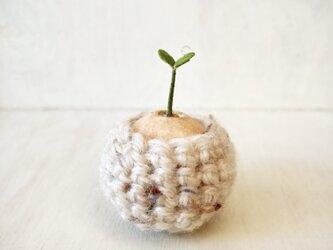 5385.bud 粘土の鉢植え お包みの画像