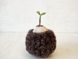 5386.bud 粘土の鉢植え お包みの画像