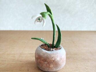 5387.bud 粘土の鉢植え スノードロップの画像