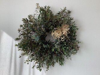 atelierBLUGRA八ヶ岳〜フレッシュユーカリのWreath50の画像